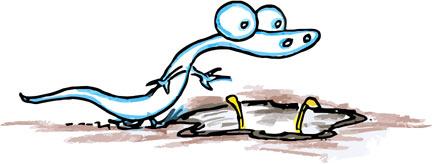 Invisible Alligators